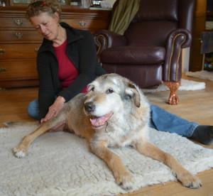 Wendy massaging a dog