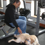 Socializing a Service Dog at the gym.