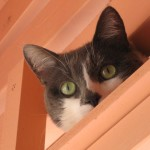 Feline Client is Suspicious